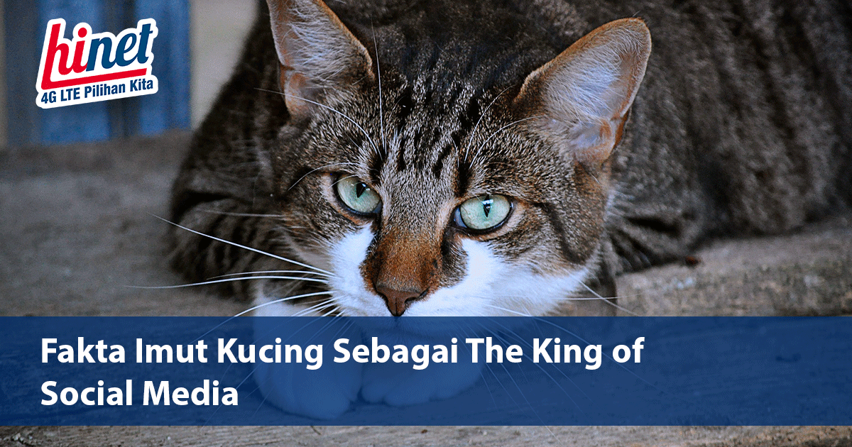 Fakta Imut Kucing Sebagai The King of Social Media